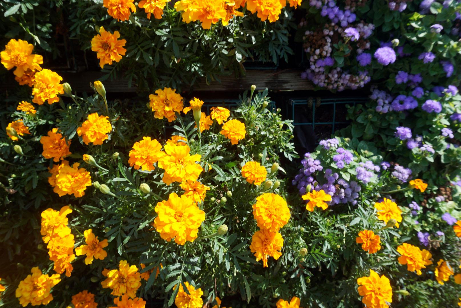 travel with me to coastal maine botanical gardens linda tenchi tran